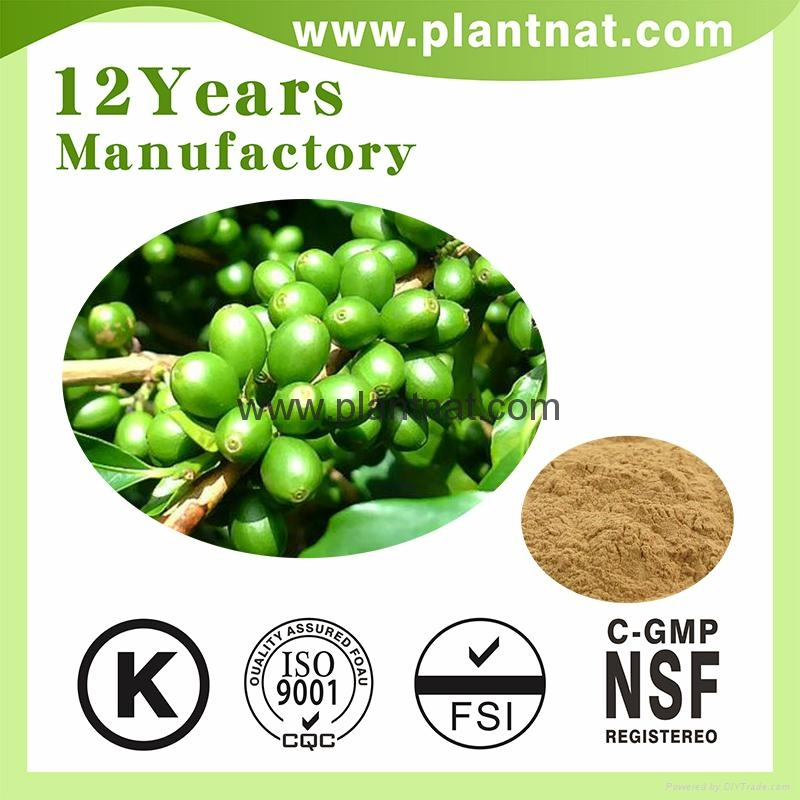 Green Coffee Bean Extract Chlorogenic Acid 50% 3
