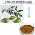 低價供應橄欖葉提取物