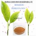 富含80%茶多酚綠茶提取物