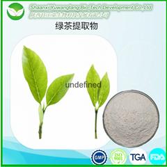 EGCG表没食子儿茶素没食子酸酯绿茶提取物