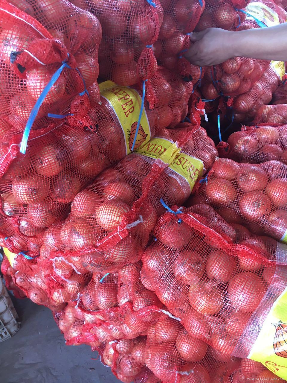 Whole sale fresh yellow onion in China  4