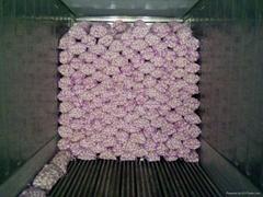 Fresh normal white garlic in China
