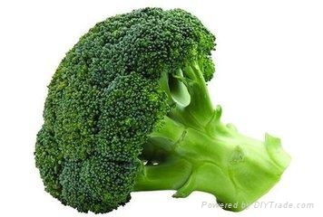 whole sale fresh broccoli  1