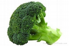 whole sale fresh broccoli