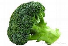 whole sale fresh broccoli