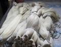 Horse tail hair in animal fur 2