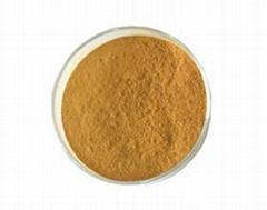 Cnidium Lactone Osthol extract 10%-98%