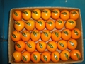 Mandarin Orange Citrus