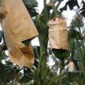 UV resistant paper banana bag /Paper