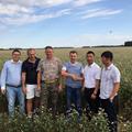 Good quality raw buckwheat kernel 3