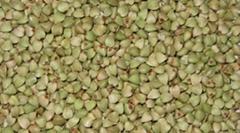 Good quality raw buckwheat kernel