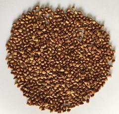 China brown roasted buckwheat kernel