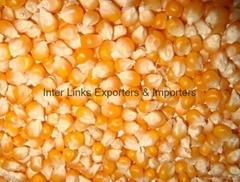 Yellow Corn/ Maize Grade 1 (Non GMO)