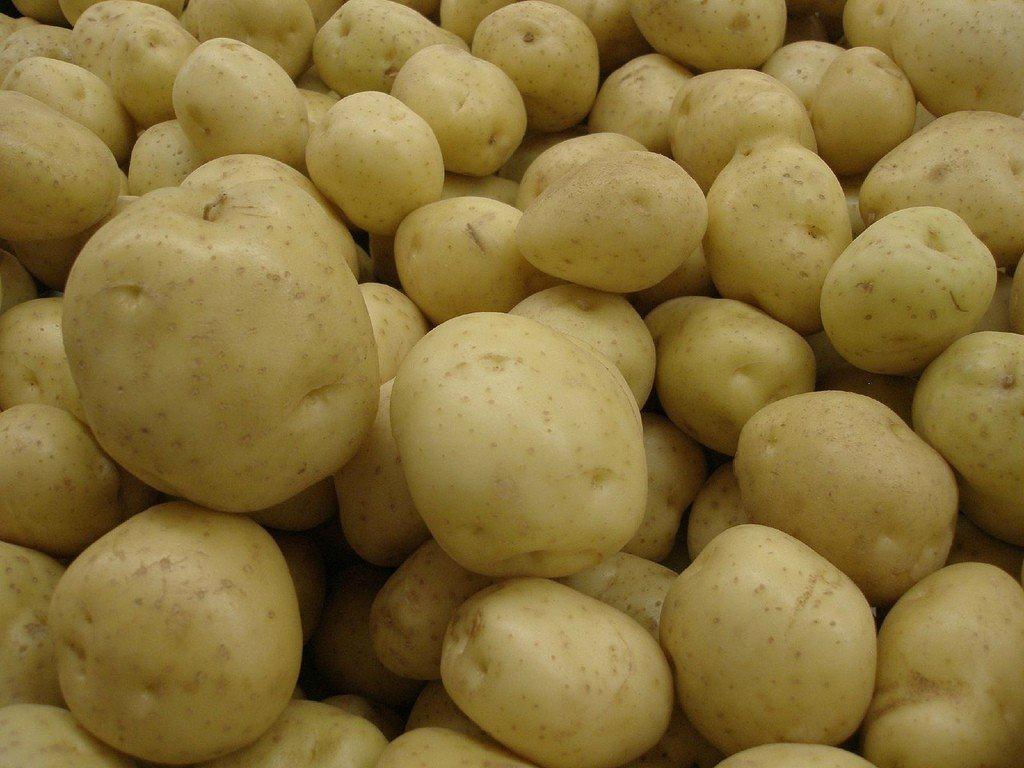 Fresh bulky Potatoes for export 2