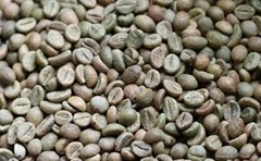 Coffee beans the best quality