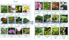 Gardening landscaping tree