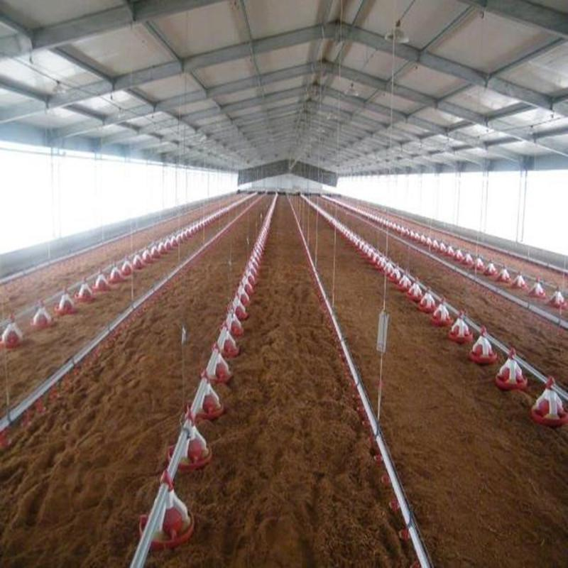 Poultry Farm Shed Chicken House for Broiler Chicken Layer Chicken 4