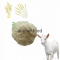 wheat gluten meal animal feed