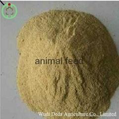 yeast animal fodder