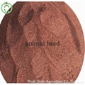 blood meal animal feed