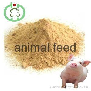 lysine feed additives 1