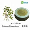 Solanum procumbens extract