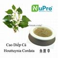 Houttuynia cordata extract