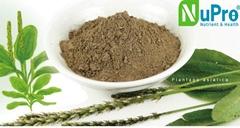Plantago major extract