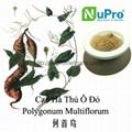 Polygonum multiflorum extract