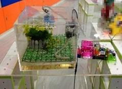 生态家园实验箱