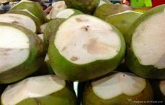 Coconut ( 84 905 179 759)
