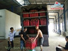 Dragon Fruit From Viet Nam ( 00 84 905 179759)