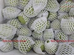 fresh guava fruit vietnam for sell