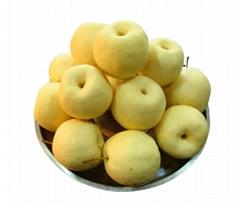 陕西礼泉酥梨现摘酥脆供应