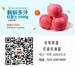 陝西紅富士蘋果精品裝包郵