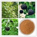Siberian Ginseng Extract 2