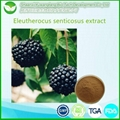Siberian Ginseng Extract 1