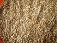 Wheat, 3 Grade 3