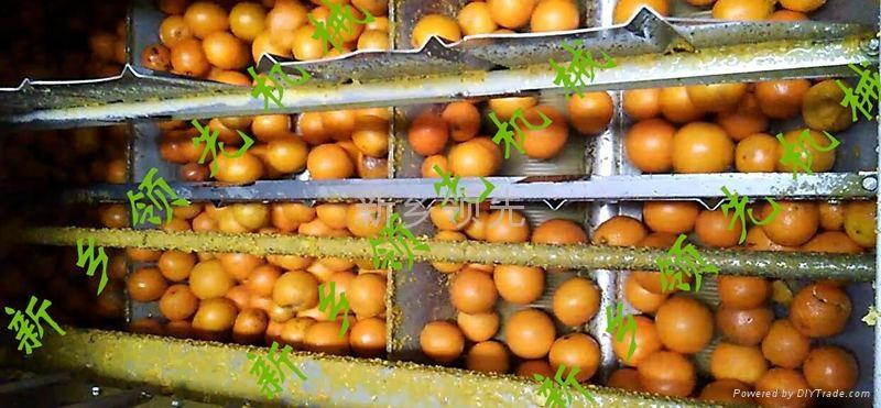 柑橘磨油机 LXMYJ  柑橘果皮精油提取设备 3