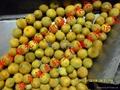 柑橘磨油机 LXMYJ  柑橘果皮精油提取设备 4