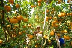 Tangerine not toxic