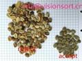 VSEE green coffee bean selecter,color sorter machine Taiwan Malaysia 3