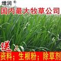 新型皇竹草種節