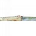 新型皇竹草種節 5