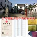 台湾甜象草种节 2