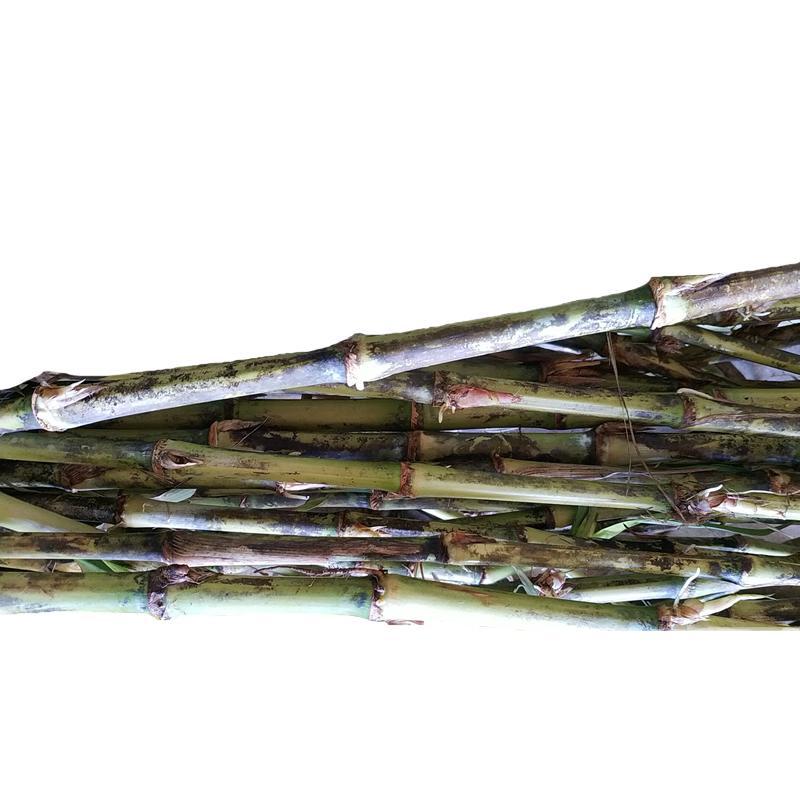 臺灣甜象草種節 3