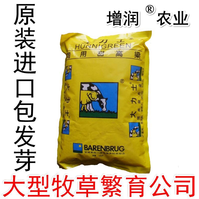 甜高粱種子包郵 甜高粱牧草種子養殖草種 1