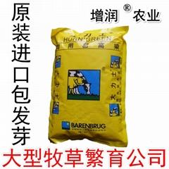 甜高粱種子包郵 甜高粱牧草種子養殖草種