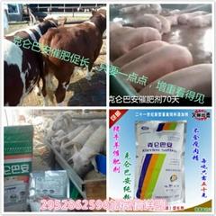 绿色 无抗 快速催肥 选择安徽克仑巴安催肥剂