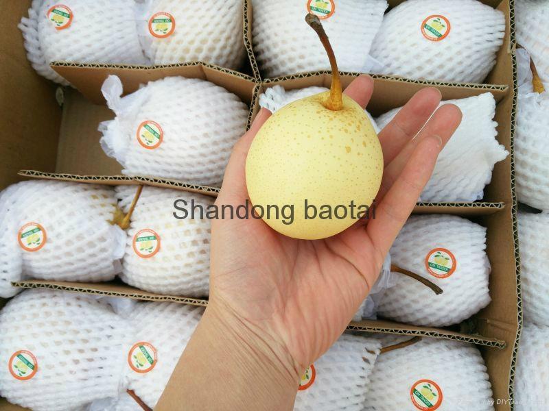 Ya pears 4
